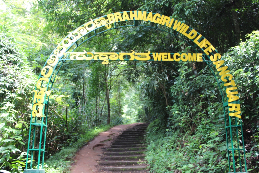 The way to Irupu Waterfalls in Brahmagiri Wildlife Sanctuary, in Kodagu district in Karnataka.